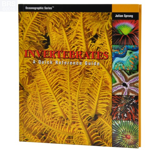 Invertebrates: A Quick Reference Guide by Julian Sprung Front Cover