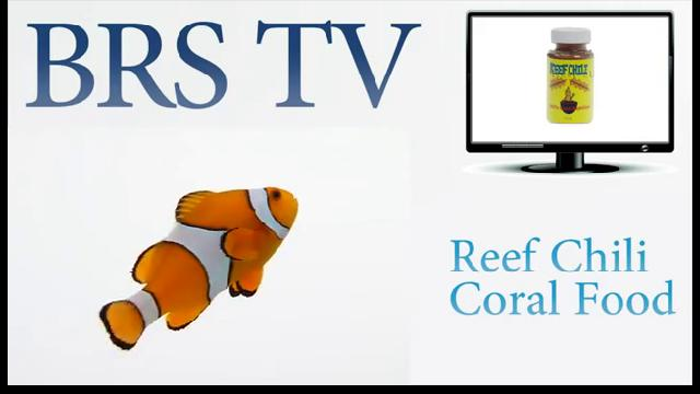 Reef Chili Coral Food